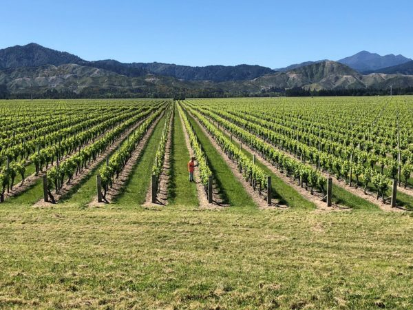 Under, On and In Grapevines: Vineyard Ecosystems