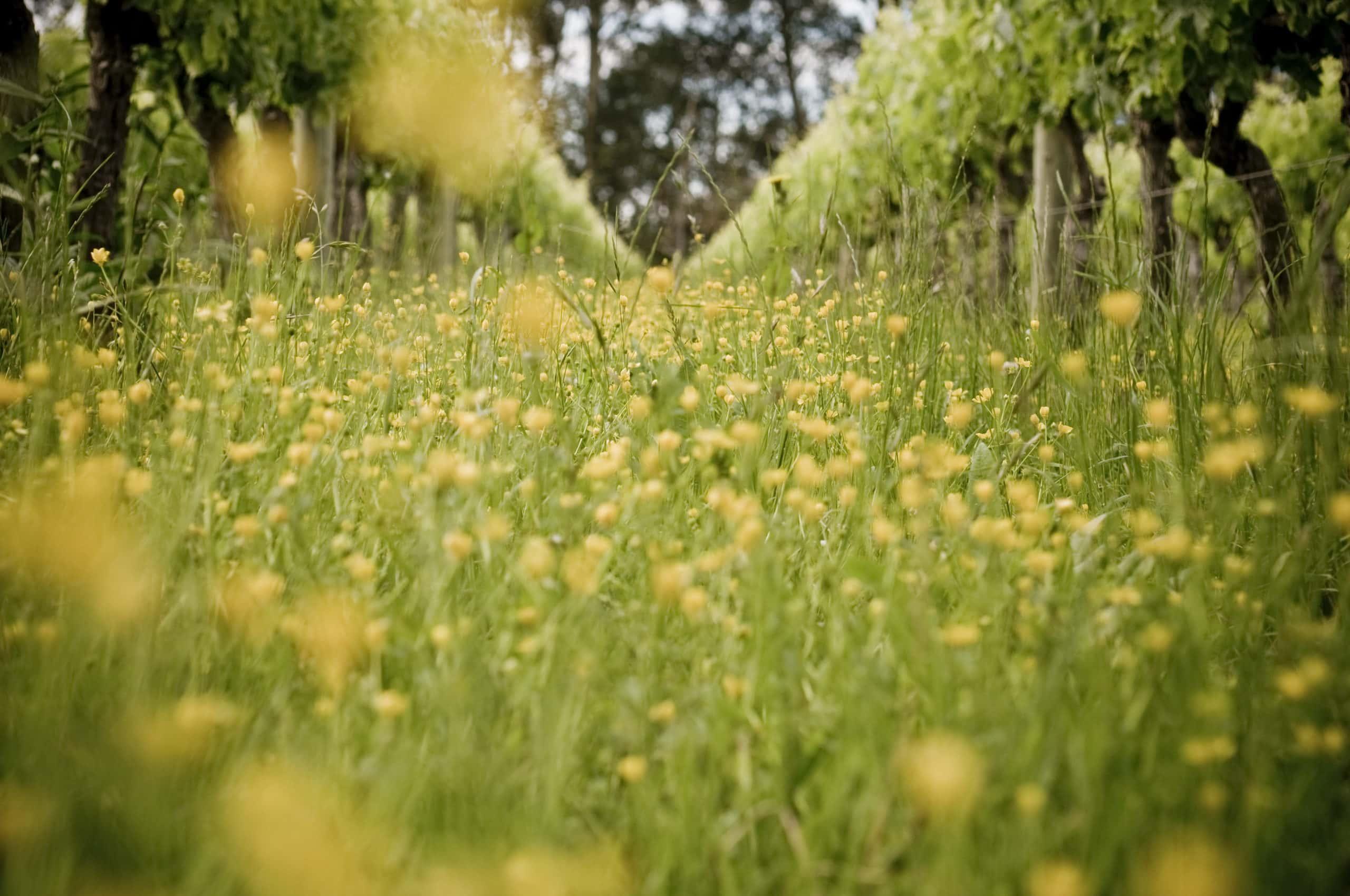 Vineyard Ecosystems