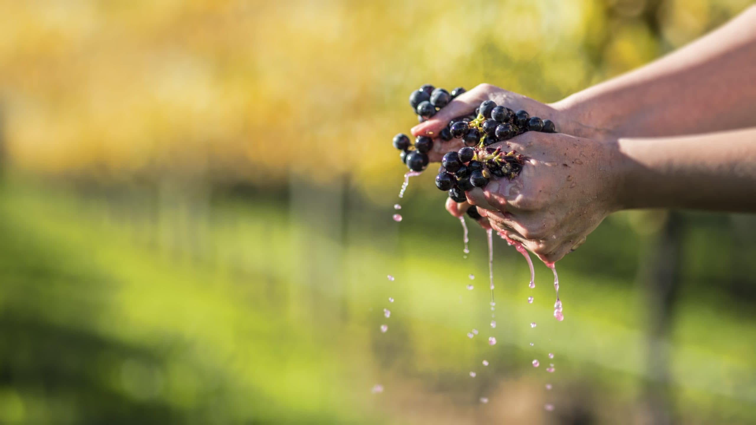 Microbes and regional Pinot noir quality and style