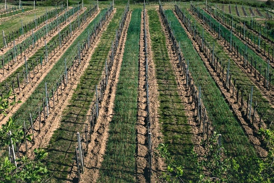 Irrigation optimization